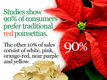 Poinsettia Colors