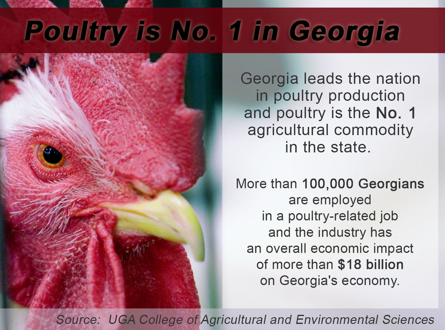 Poultry Is No. 1