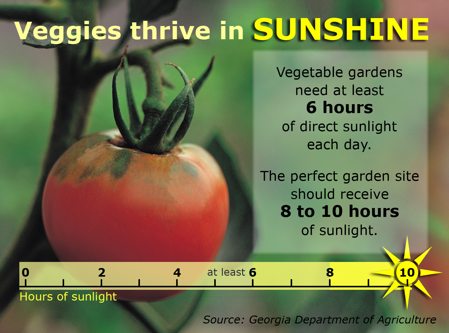 Veggie Sunshine