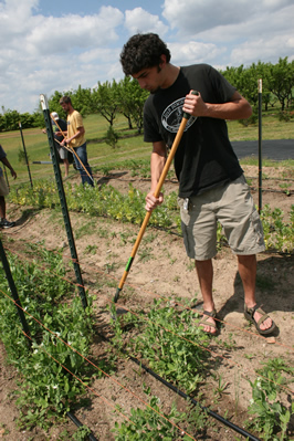 Student working at UGA's organic demonstration farm at the Durham Horticulture Farm, at 1221 Hog Mountain Road in Watkinsville.