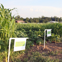 Fall Cover Crops