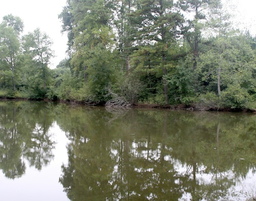 The pond on the University of Georgia Westbrook Research Farm off Ellis Road in Griffin, Ga.