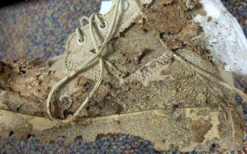 Termites on a boot in the University of Georgia Military Building's supply room in Athens, Ga.