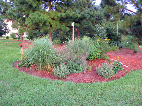 Photo of a rain garden taken by North Carolina Cooperative Extension personnel.