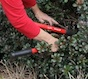 Whether it's trimming shrubs, removing plants or installing new ones, you can resolve to improve your landscape this year.