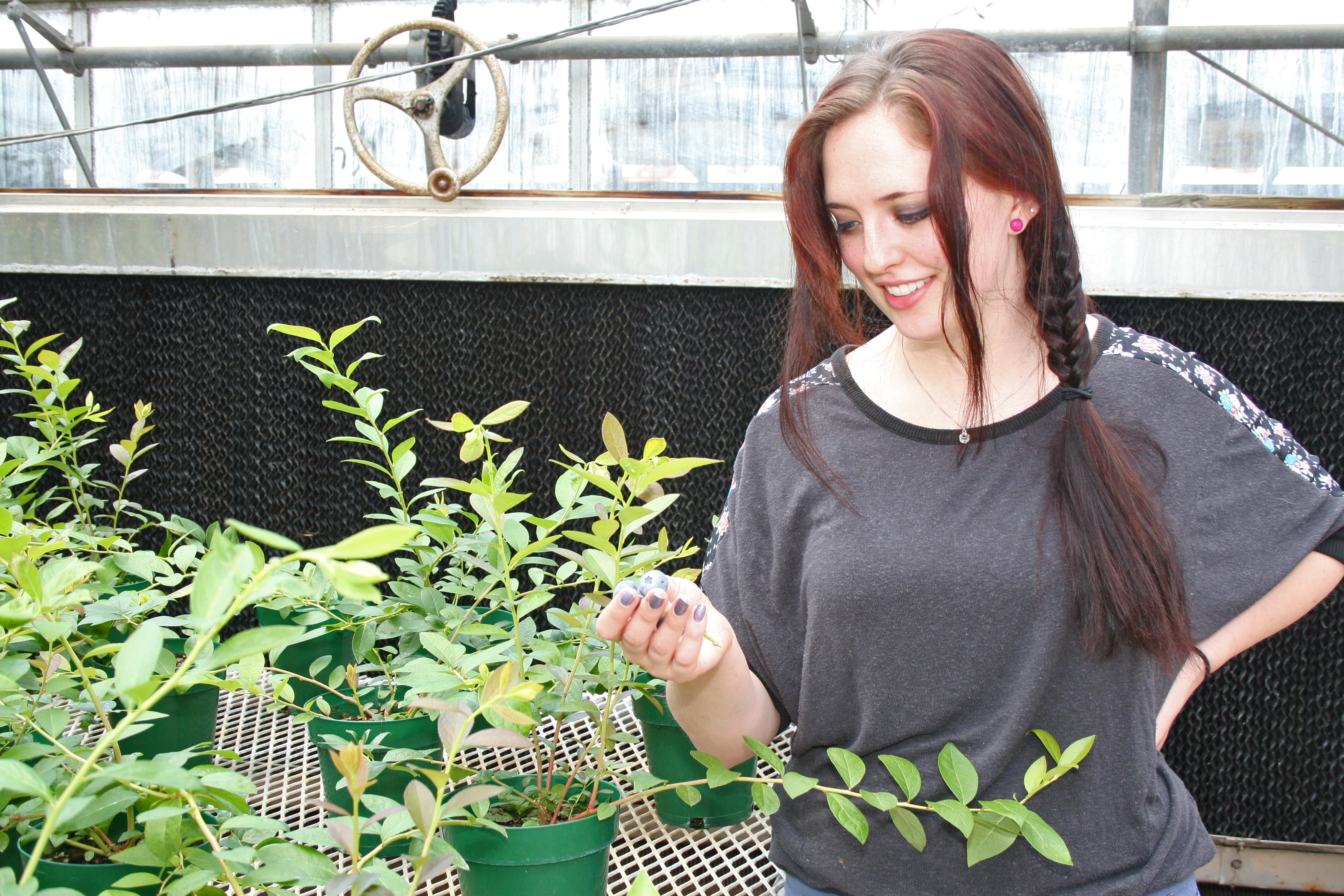 Holly Young, who graduated with a degree in agricultural communications, recently won first place in the oral presentations section of  the UGA College of Agricultural and Environmental Sciences Undergraduate Research Symposium. Her project, which she began before graduation, was to identify the genetic diversity in Exobasidium, a species of fungus that attacks blueberries.
