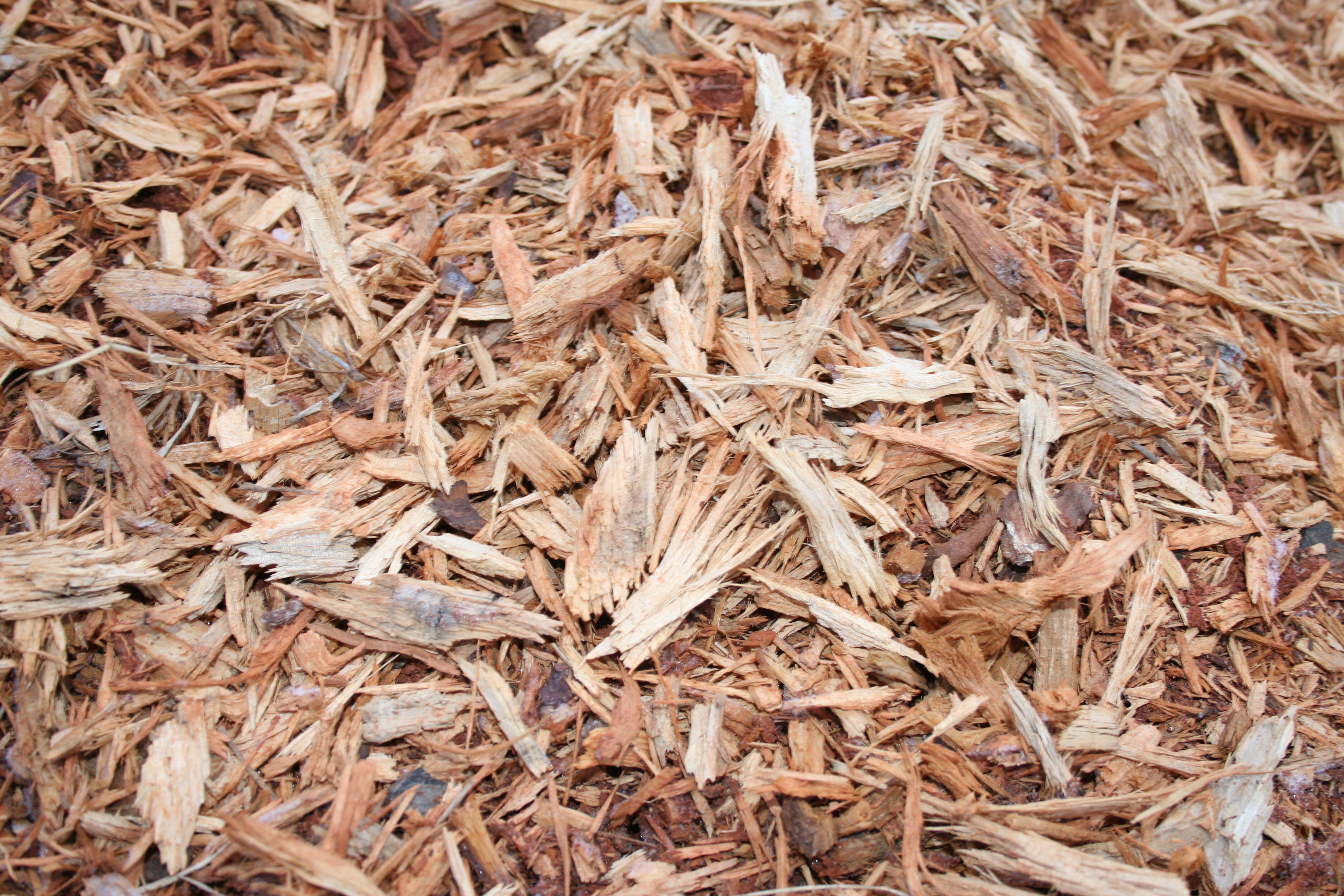 Fresh woodchips are mostly carbon and will steal nitrogen from the plant's soil in their urgency to begin composting.
