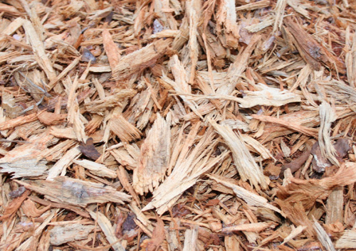 Fresh woodchips