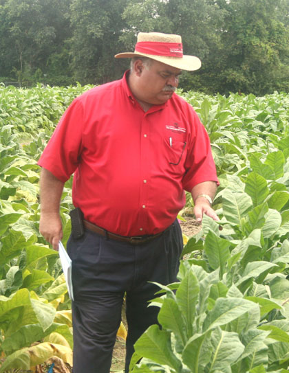 J. Michael Moore, UGA tobacco agronomist, examines tobacco stalks on the Tifton campus during the annual Tobacco Tour.