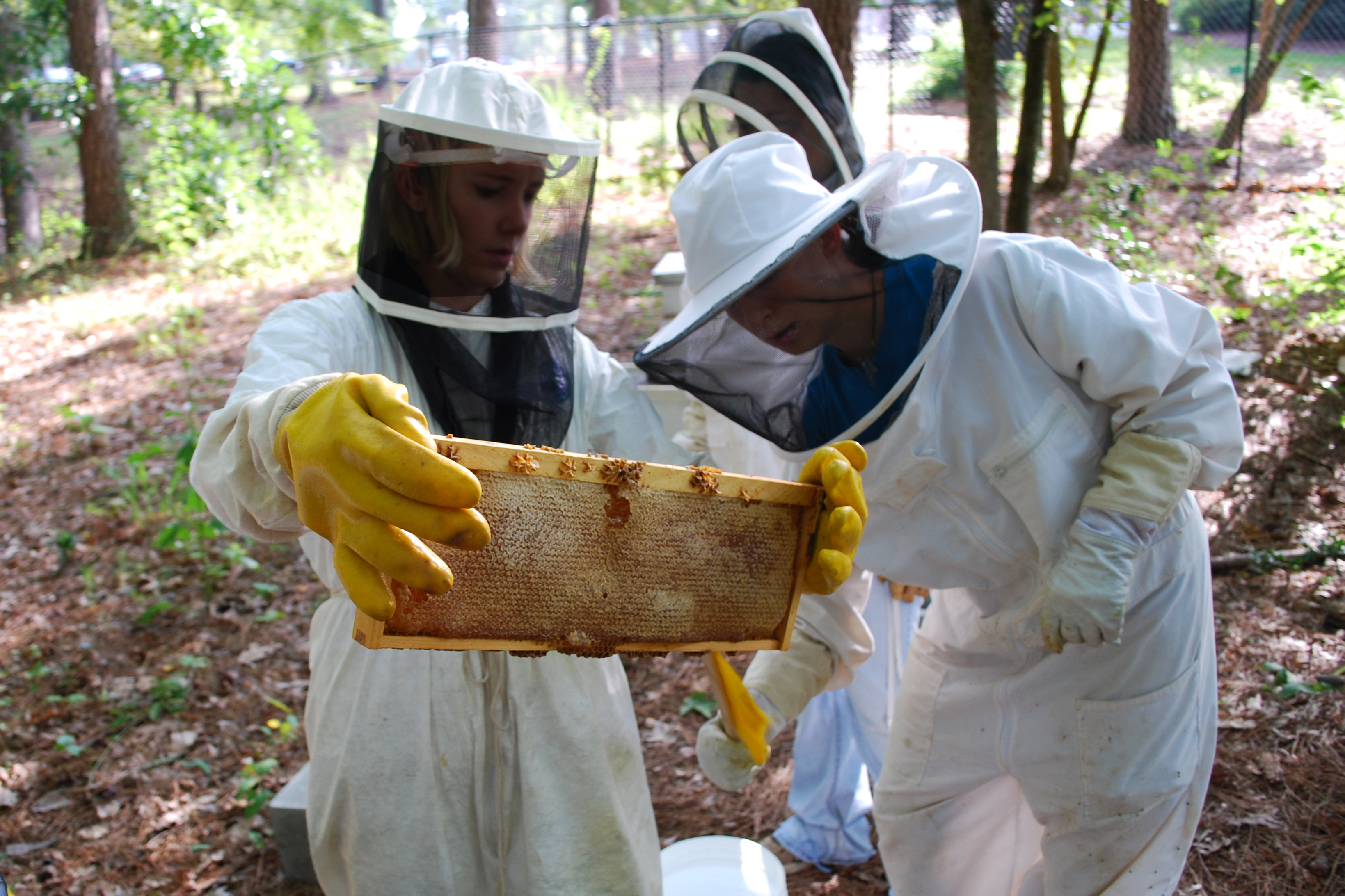 Staff members from Rock Eagle 4-H Center are shown checking a frame from a bee hive at the center in Eatonton, Ga.