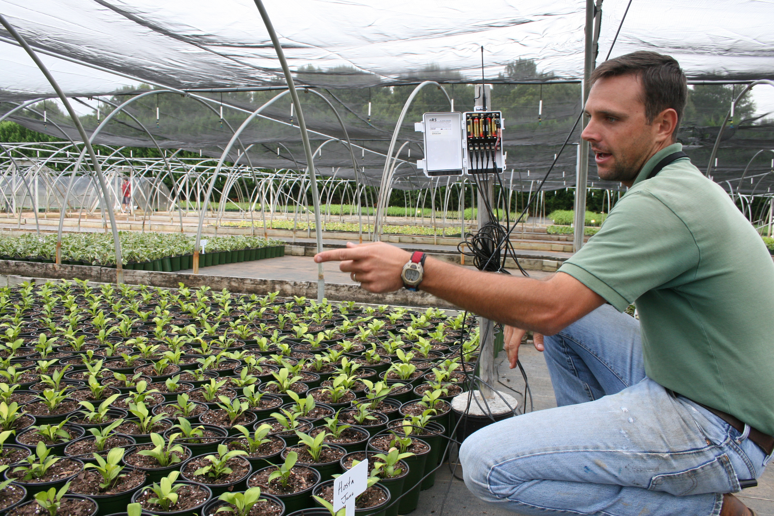 Will Ross, head grower at Evergreen Nursery in Statham, explains how a new automated micro-irrigation system developed by UGA researchers has helped him get these hostas — being grown for next spring — off to a good start.