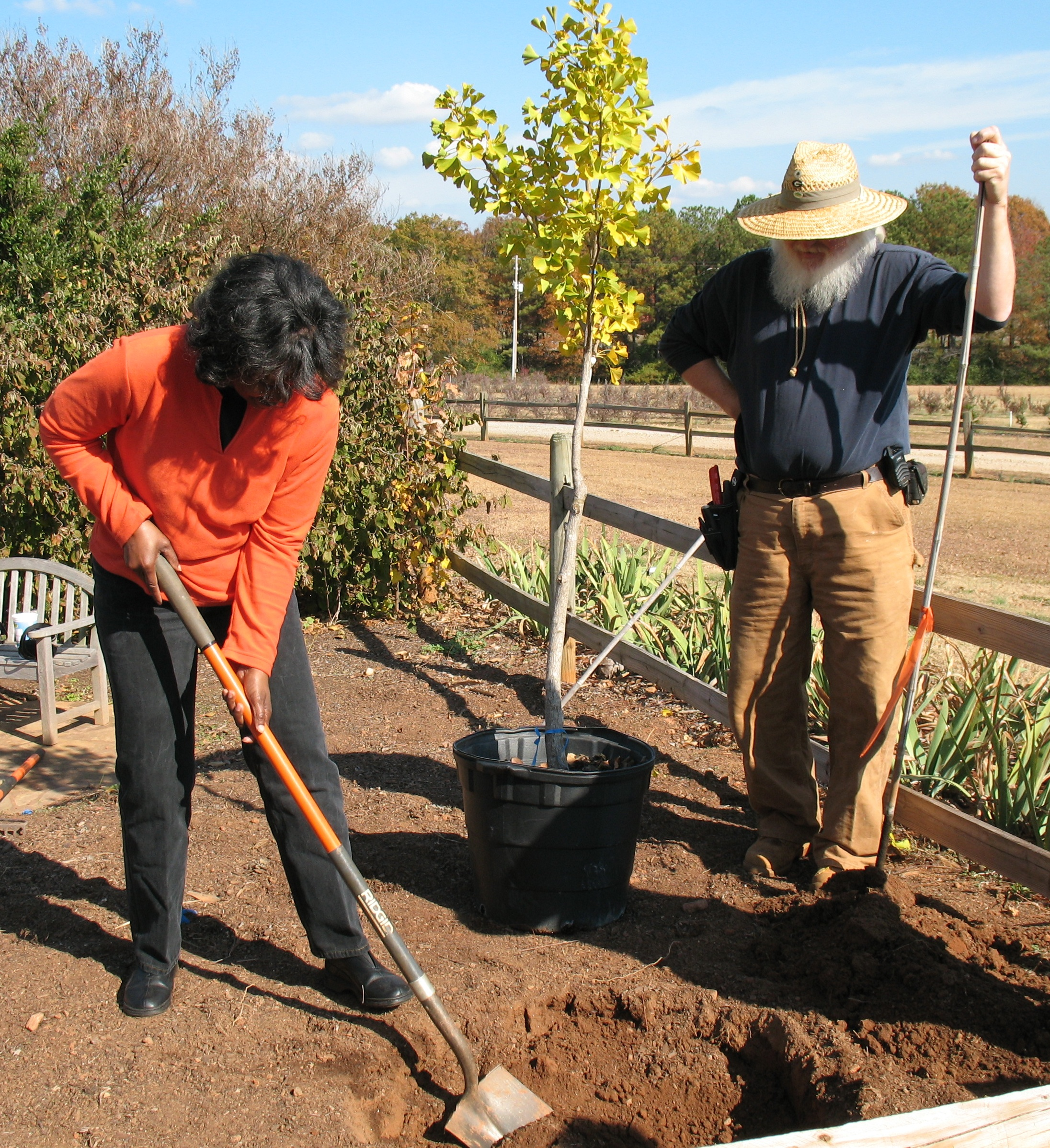 Fall is the perfect time to install new trees or shrubs or to move existing ones to new locations. University of Georgia Cooperative Extension experts recommend digging the planting hole two to three times the diameter of the soil ball.