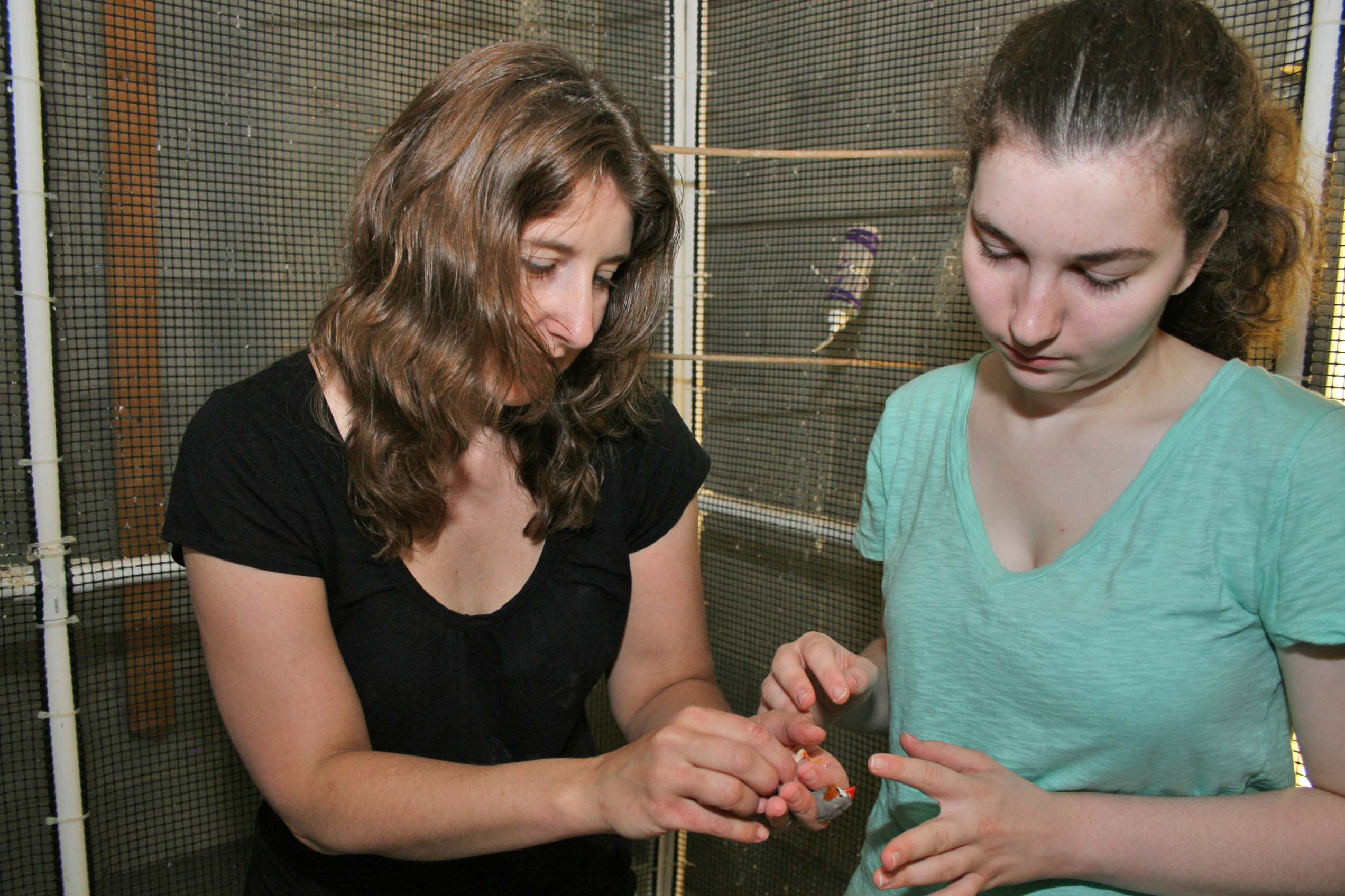 UGA poultry scientist Kristen Navarra, left, and high school researcher Maria Orlando, work to catch finches so they can be examined for signs of stress. Navarra uses finches and chickens to assess the effectiveness of enrichment activities.