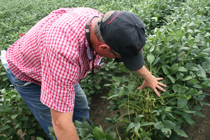 Phillip Roberts, Extension entomologist with the University of Georgia Tifton Campus, searches a soybean plant at a field in Midville for kudzu bugs.