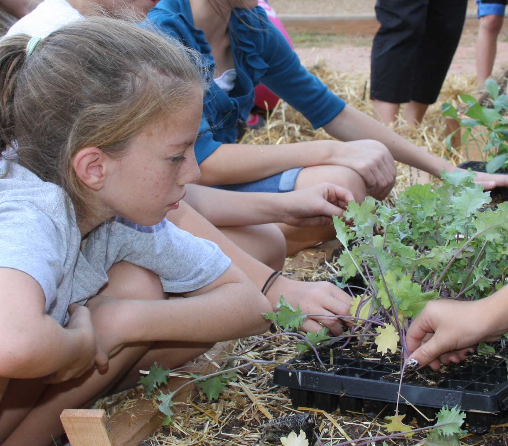 Students at High Shoals Elementary School in Oconee County work in their school garden.