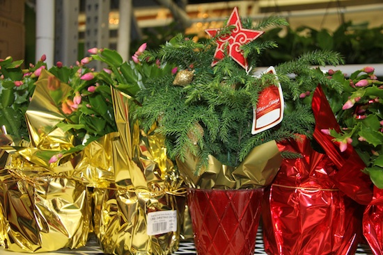 Christmas plants, like these Christmas cacti and Norfolk Island pine, can make the perfect gift for the green thumbs on your holiday list.