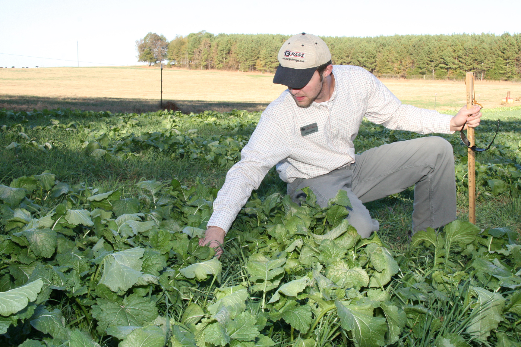 Madison County Extension Agent Adam Speir inspects turnip tops in Madison County farmer Terry Chandler's pasture in fall 2013.