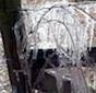 Ice on fence