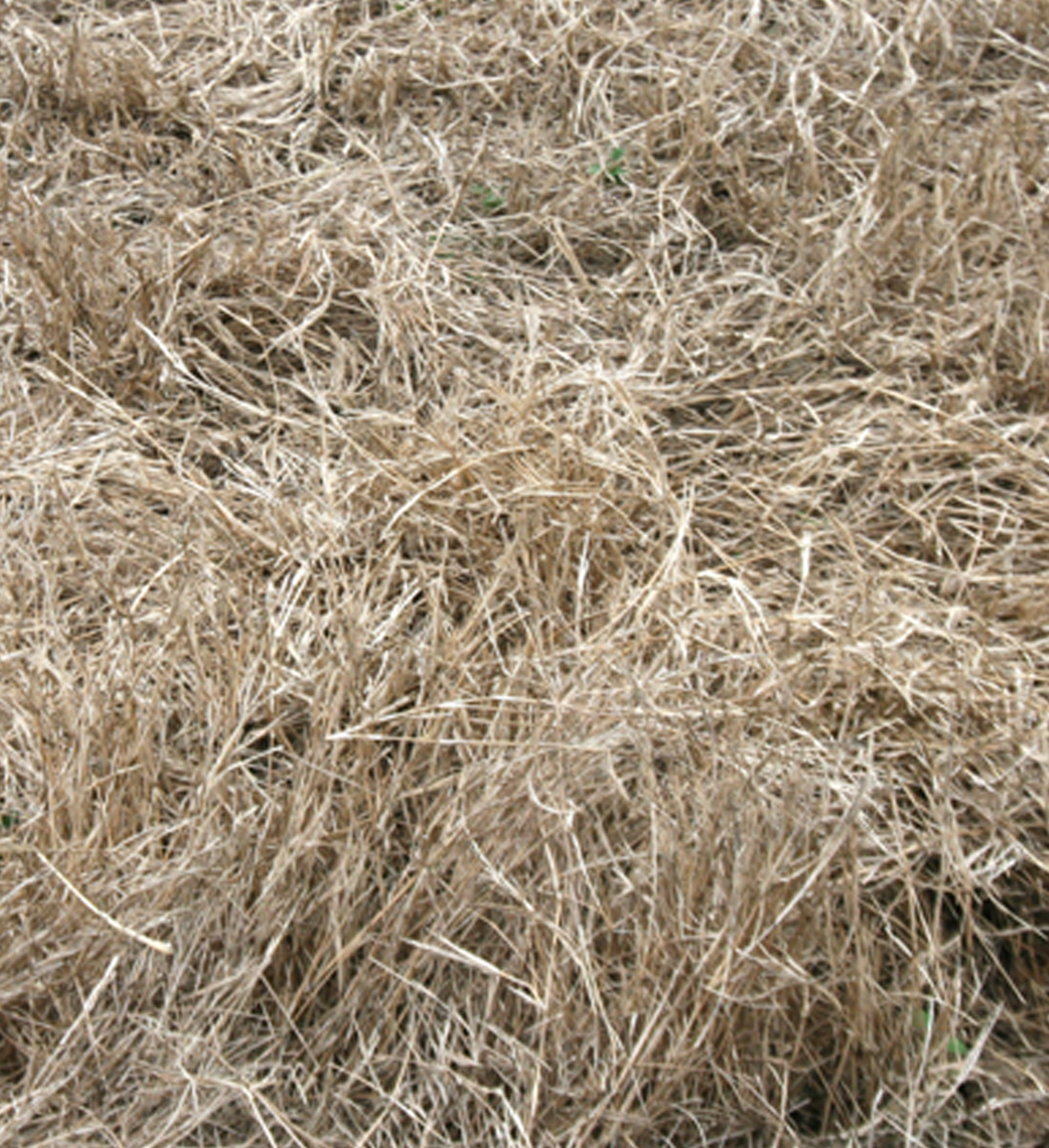 Here is a picture of poor forage quality.