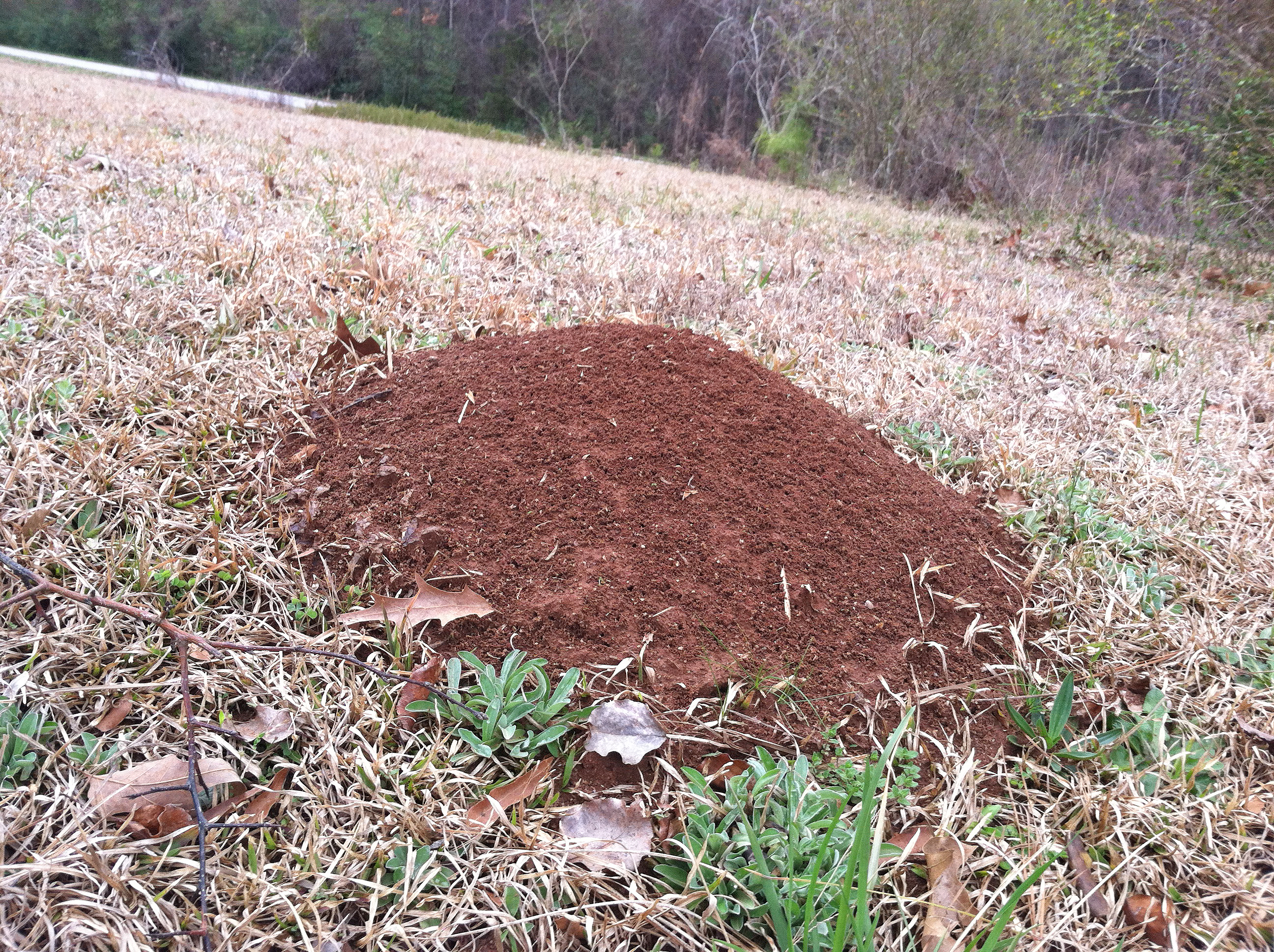 University of Georgia experts say using two steps to treat fire ant mounds this fall will cut down their numbers in the spring.
