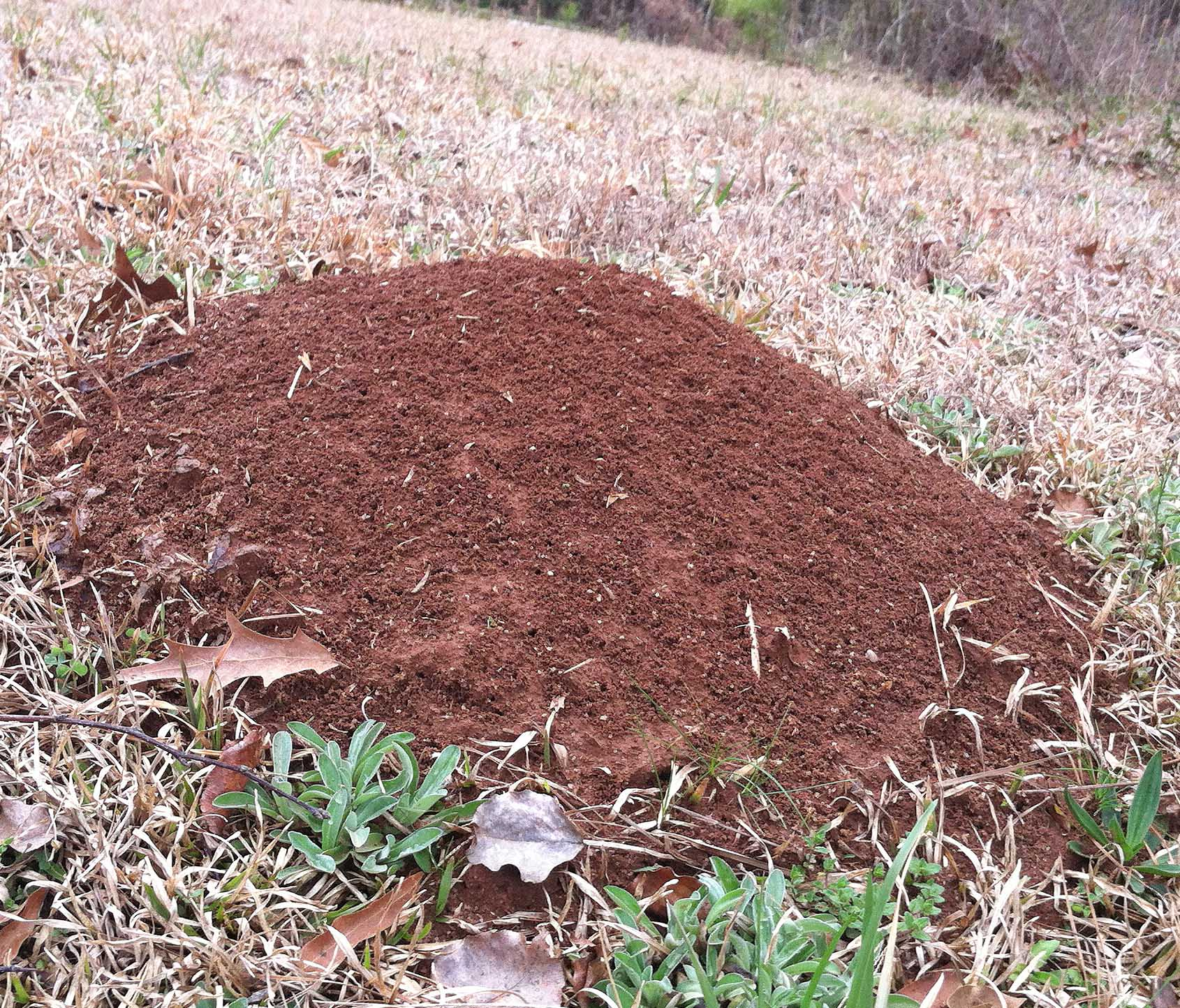 Don't let fire ants ruin your afternoons.