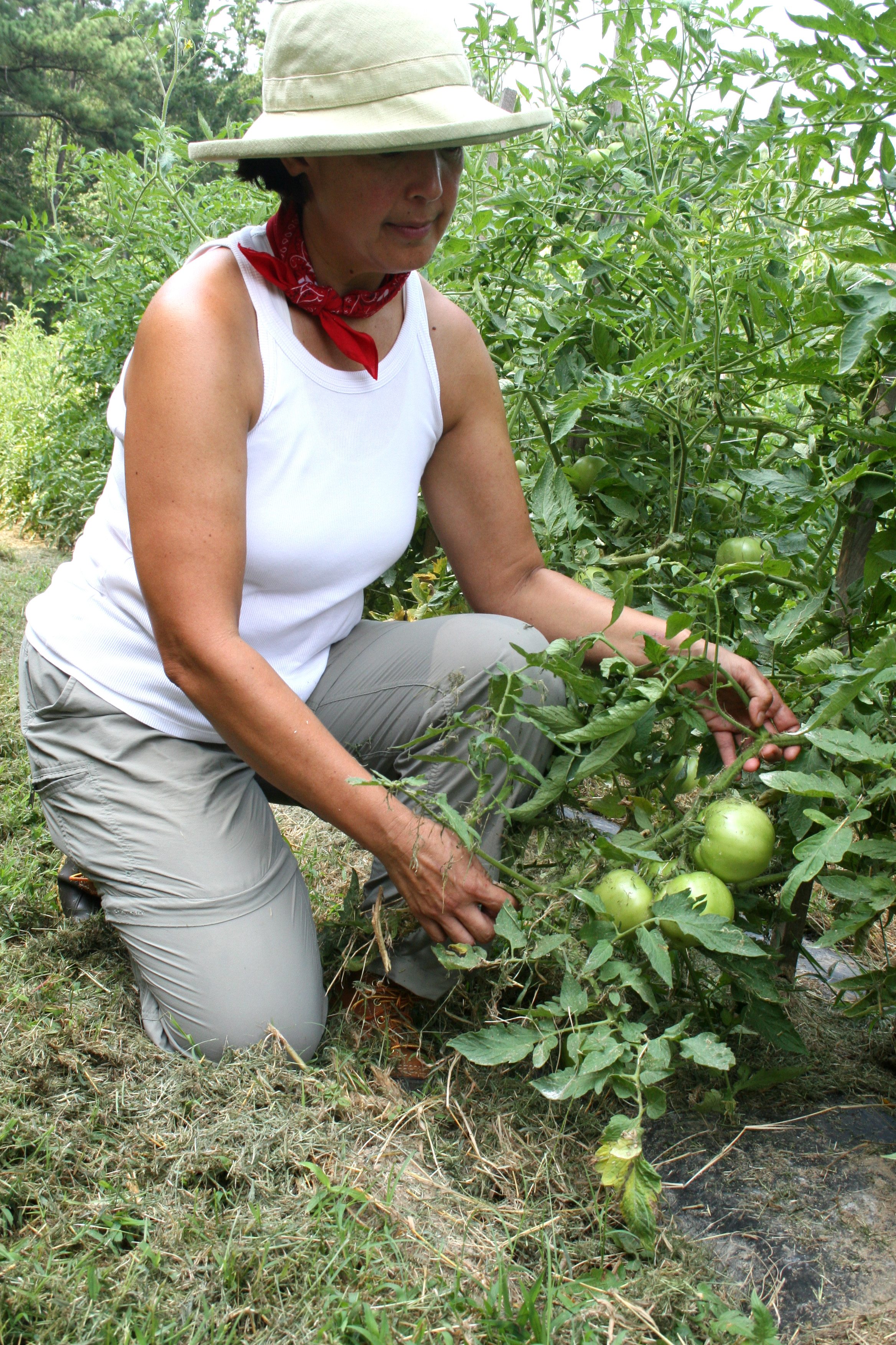 Becky Douville of Able 2 Farm in Fayette County, Ga., trys her best to grow her crops organically. For example, she always grows enough tomatoes to share with the worms.