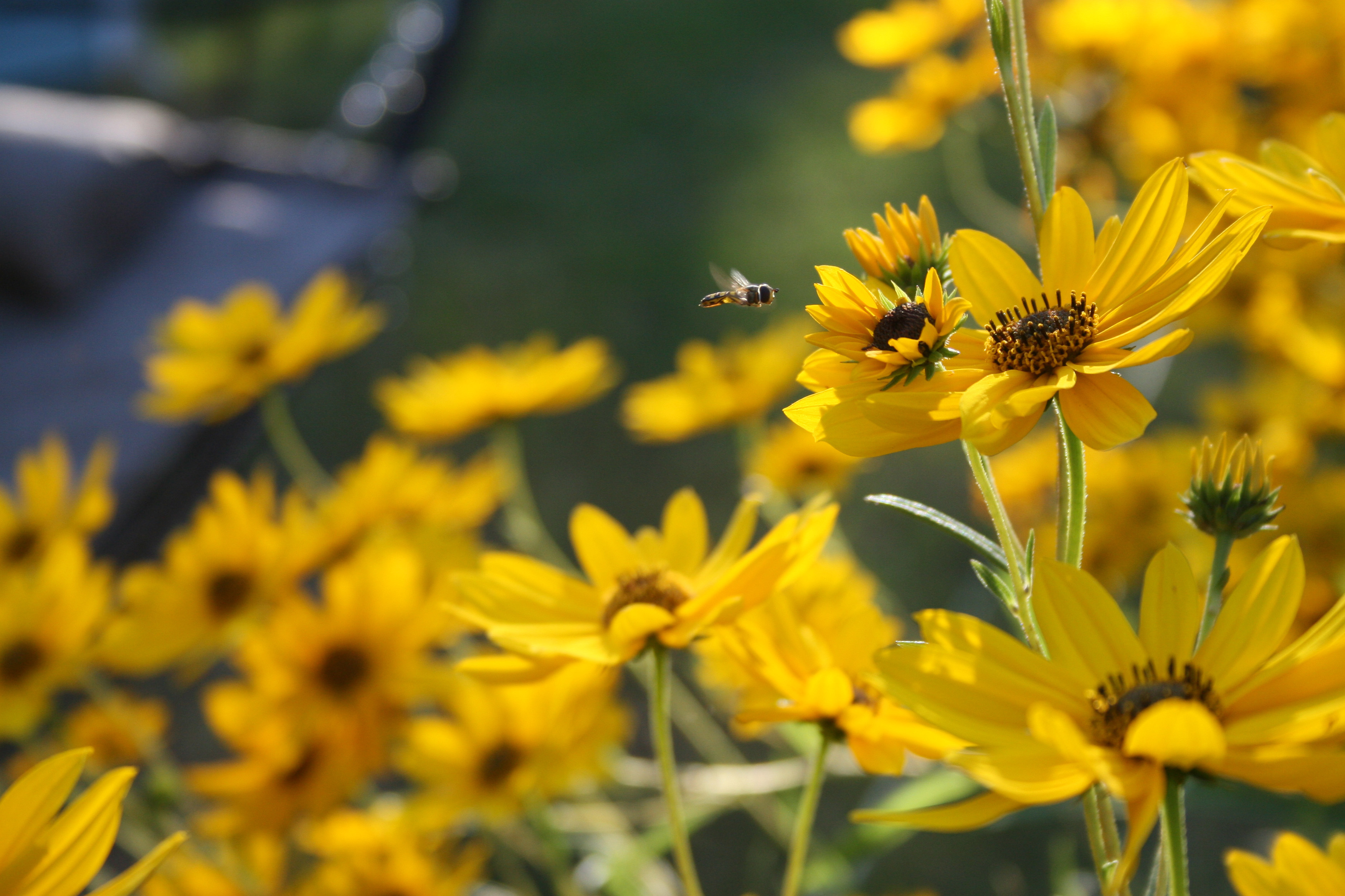 Up-coming workshop will cover how to select plants to attract pollinators. Participants will plant a container garden to take home.