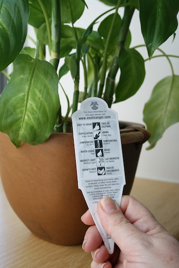 When selecting plants for hanging baskets, place like plants together. To determine a plant's needs, read the plant label provided by the nursery.