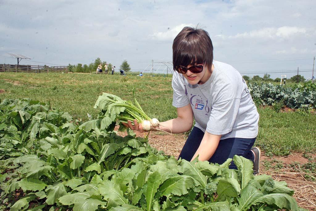 organic production harvest