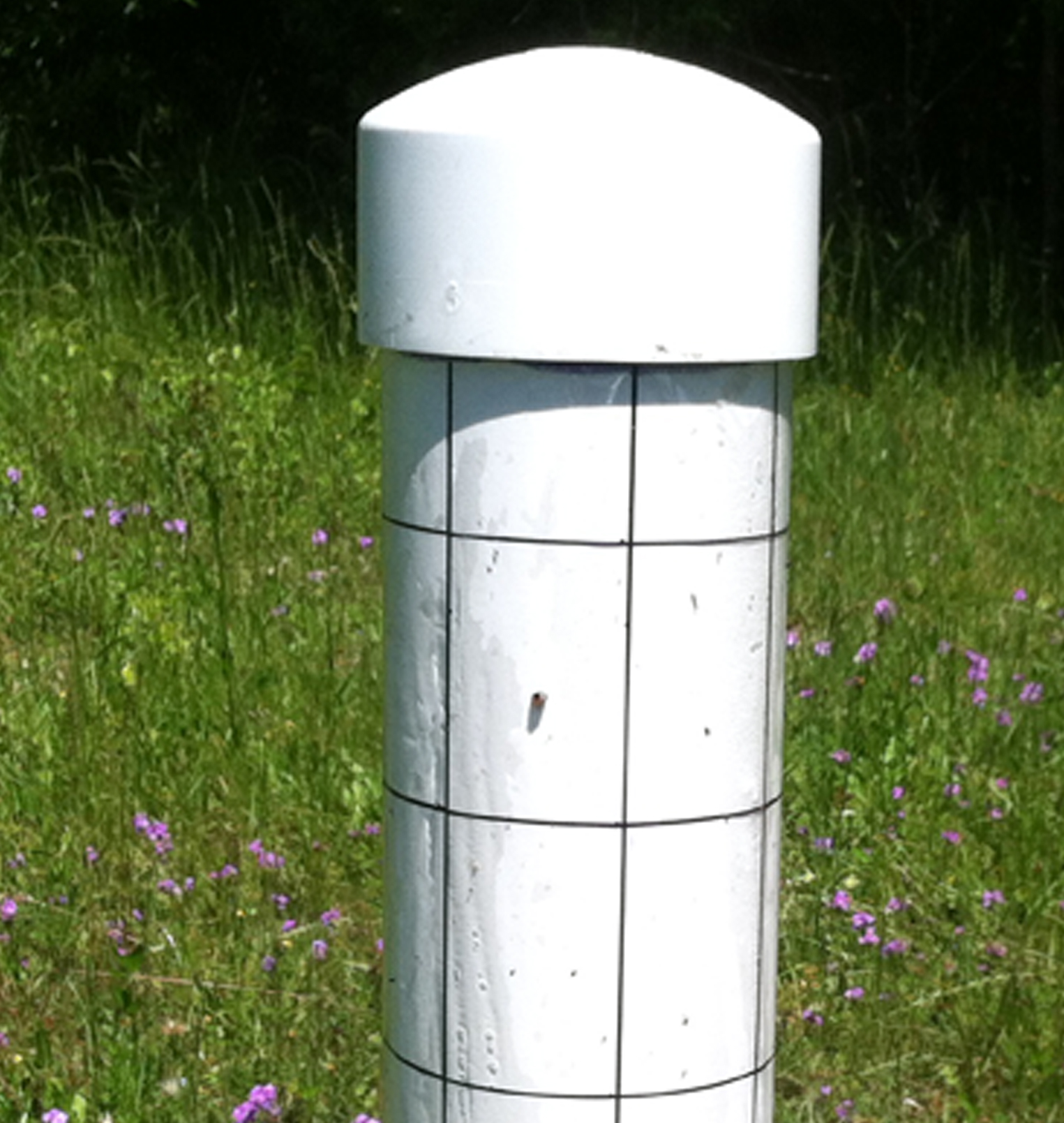 This is an example of a kudzu bug trap currently deployed at a Dooly County farm.