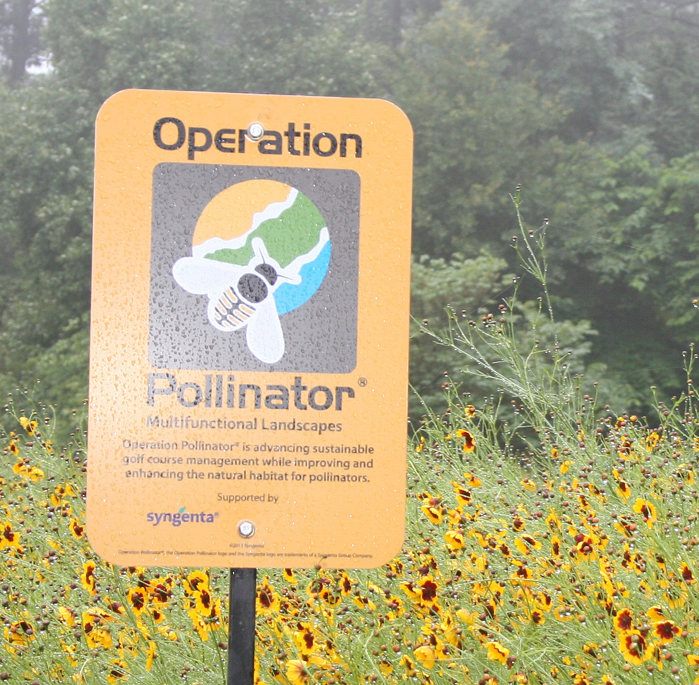 An early morning golfer stops to inspect the pollinator habitat at the University of Georgia Golf Course. This patch near the course's first hole is filled with a mix of wildflowers that will bloom from March to September. It's the first of seven to eight acres of pollinator habitat slated for the golf course.