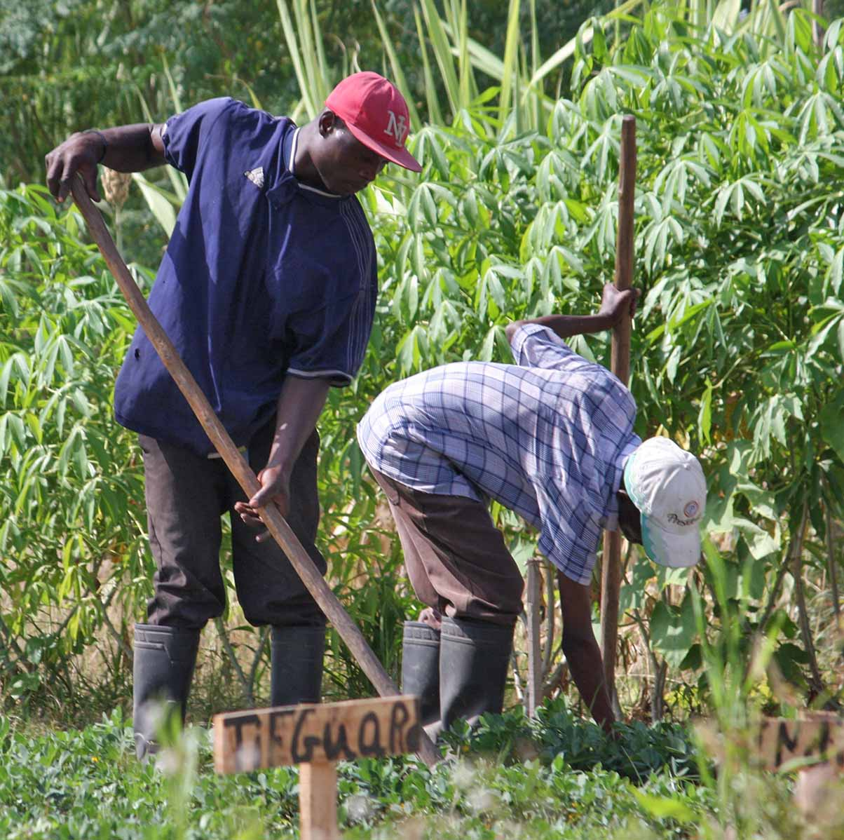 Haitian workers cultivate a plot of TifGuard peanuts on the Meds & Food for Kids experimental research plot just outside of Cap Haitien, Haiti.