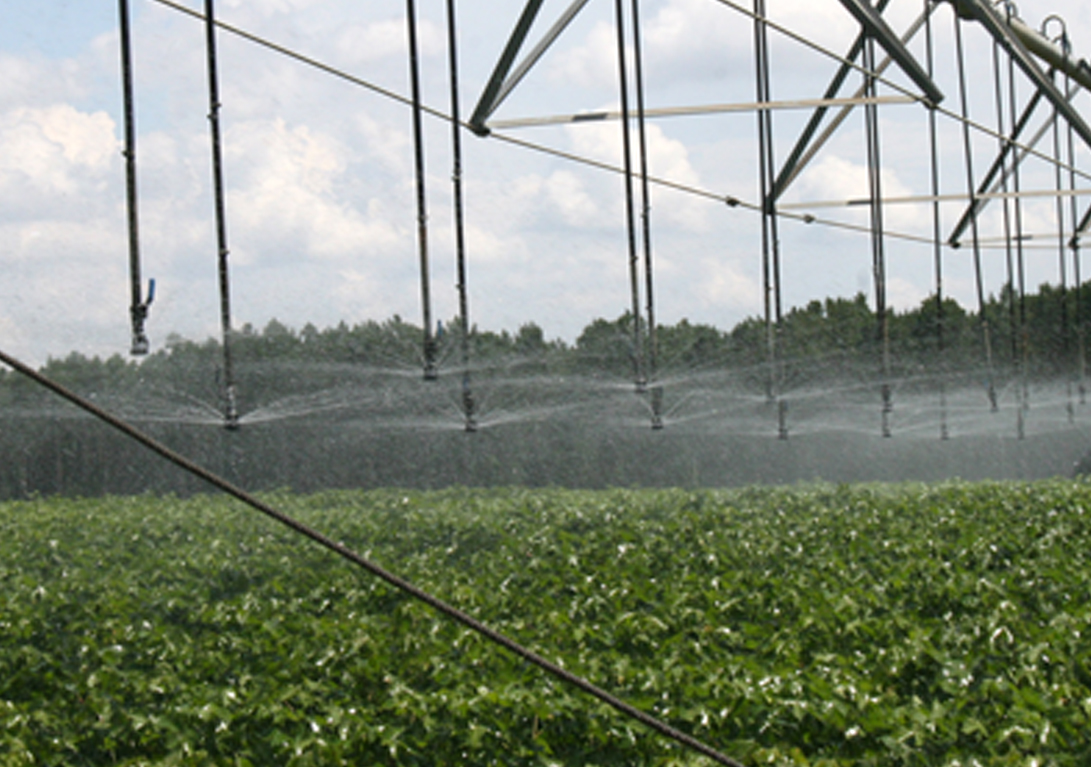 Cotton gets irrigated at UGA's Lang-Rigdon Farm in Tifton, Georgia on Thursday, July 10, 2014.