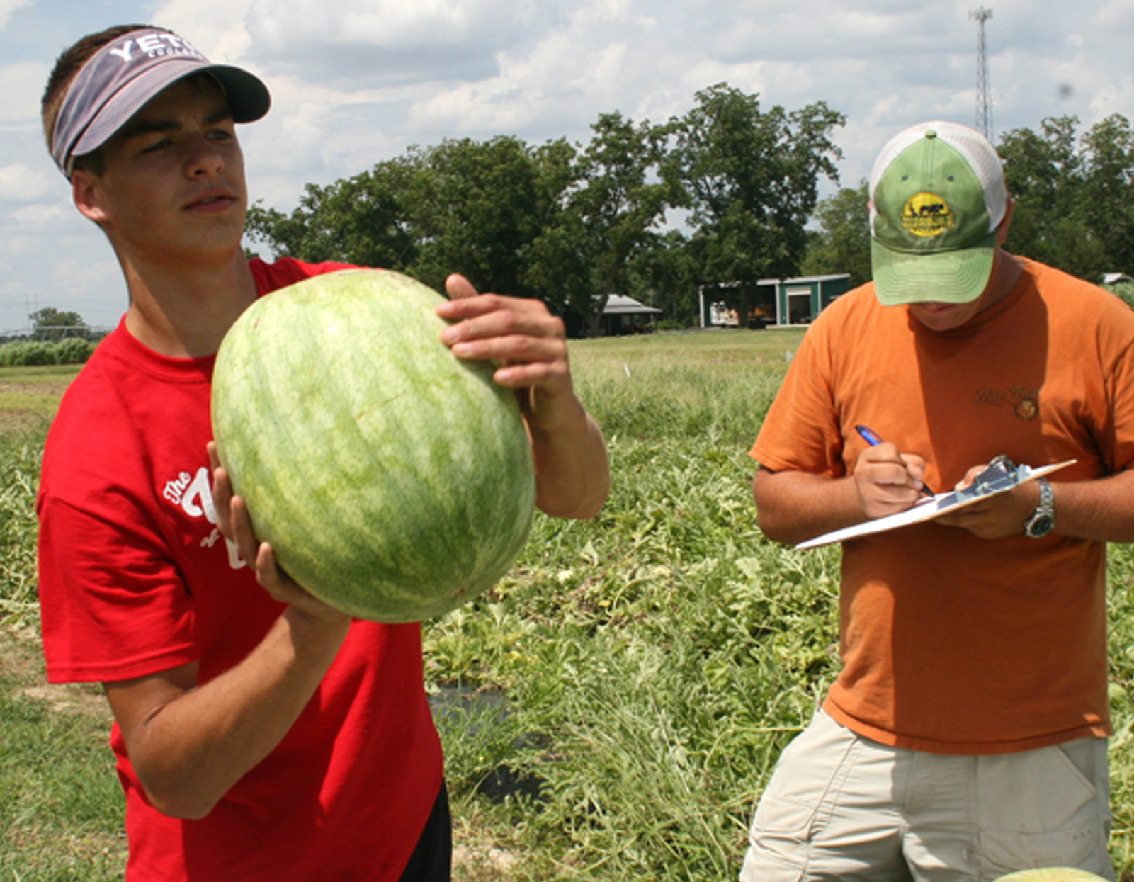 Beau Lamb tosses a watermelon into a truck, as Robert Ames writes down its weight while working at the UGA Tifton Campus. The two student workers work for vegetable horticulturist Tim Coolong.