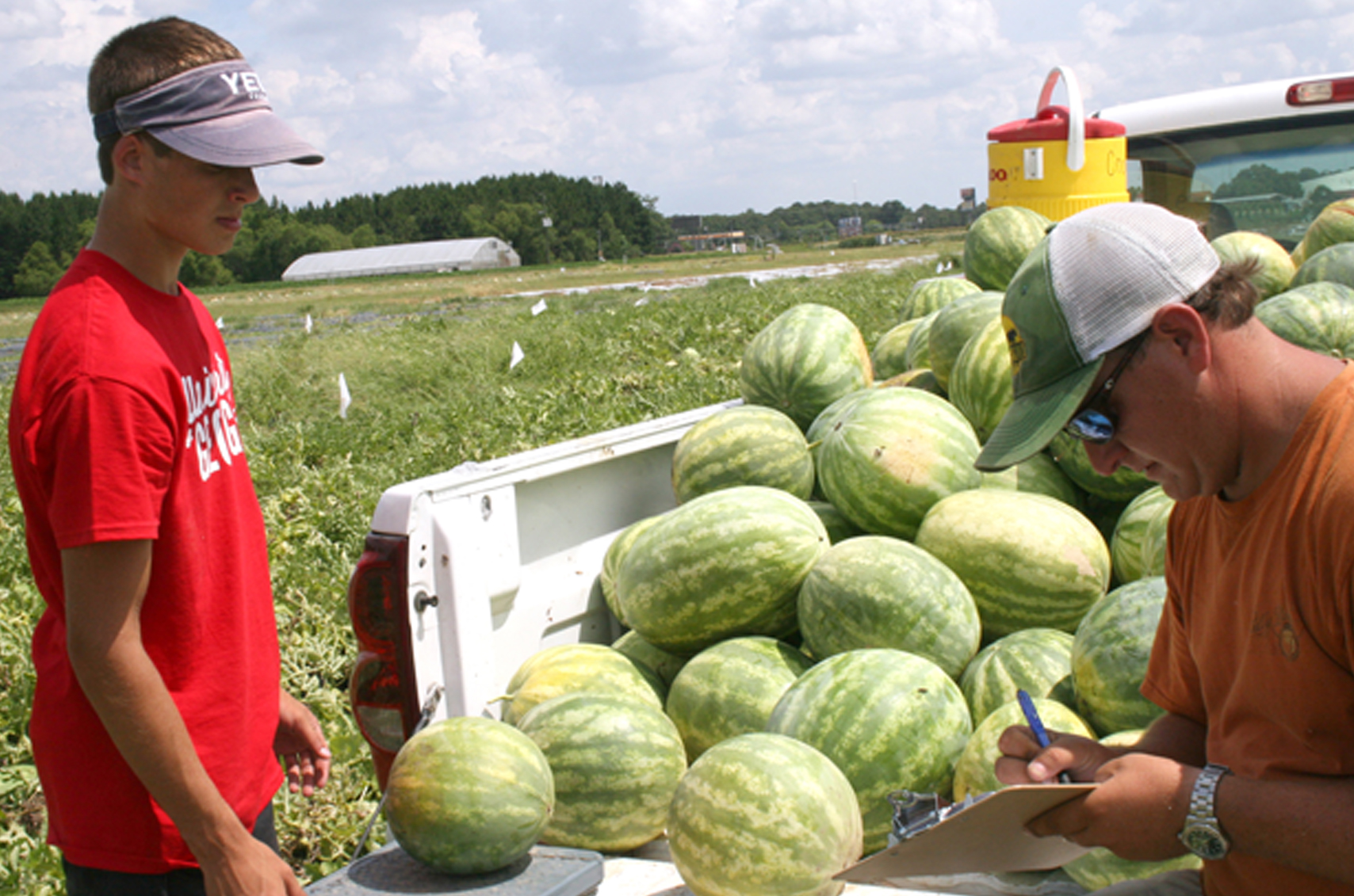 Robert Ames, right, records the weight of a watermelon as fellow student worker Beau Lamb watches. Both work for UGA Vegetable Horticulturist Tim Coolong on the Tifton Campus.