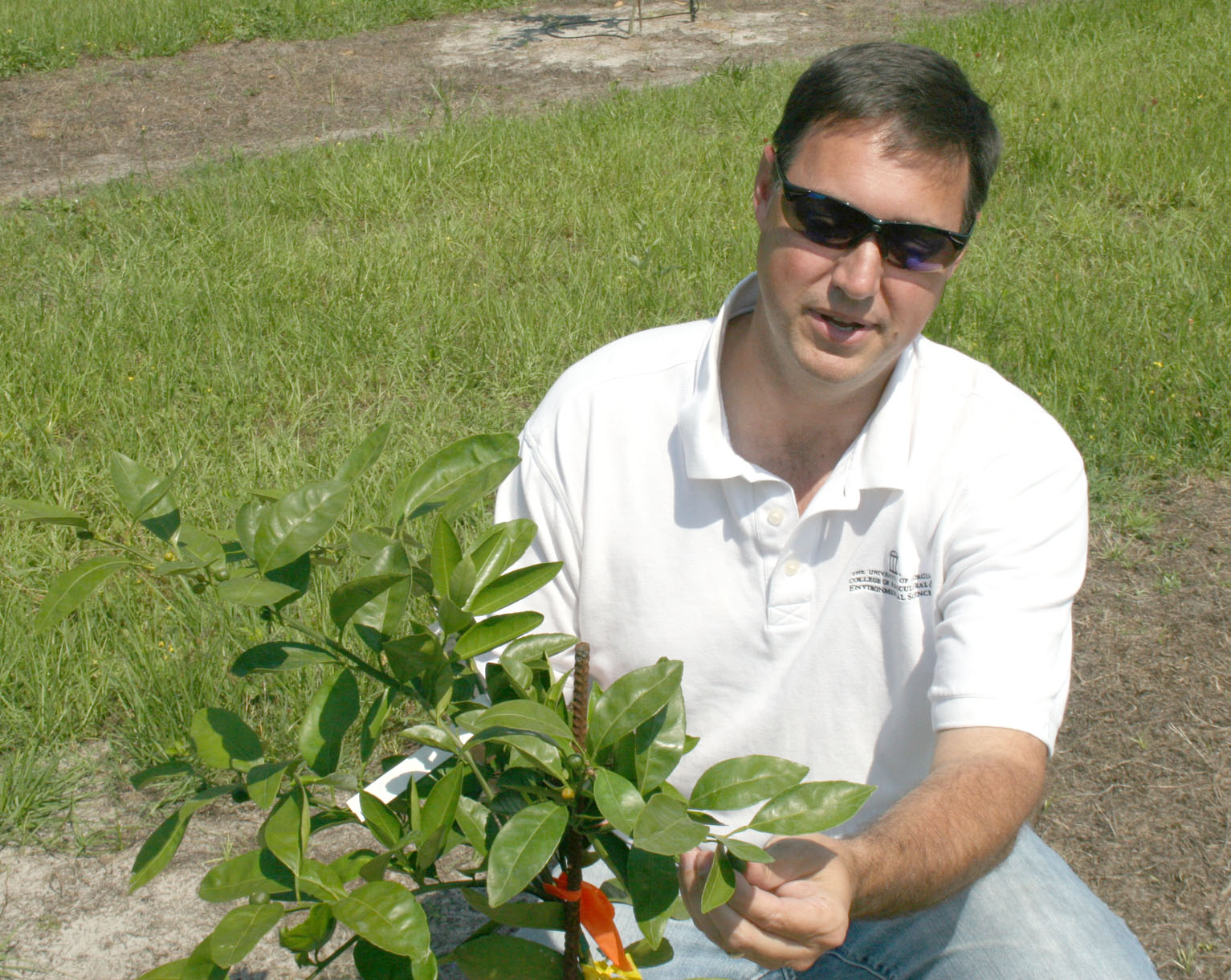 Lowndes County Extension Coordinator Jacob Price looks at a Satsuma orange plant on a private farm in Lowndes County in 2015.