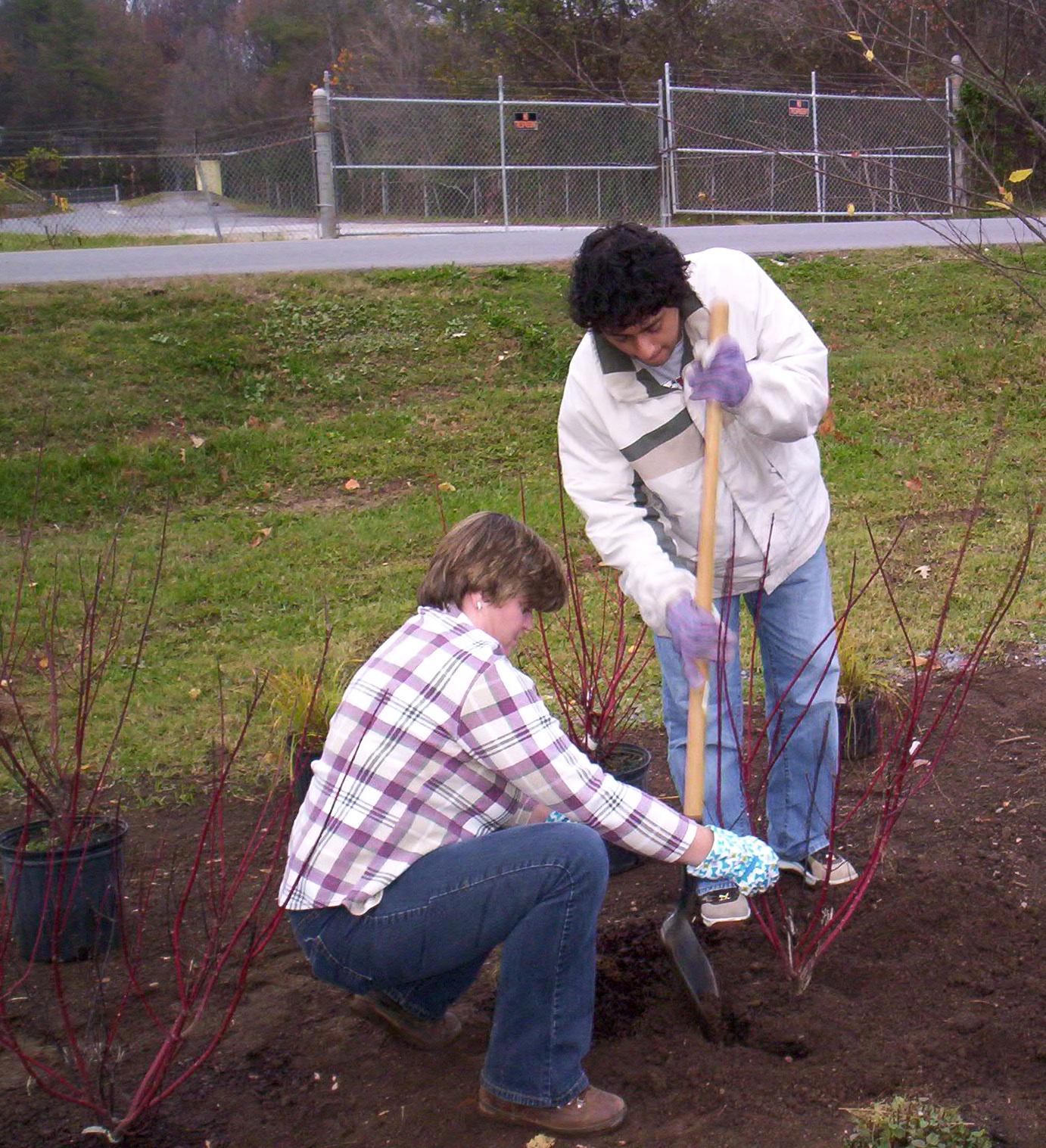 Eager home gardeners may have ordered bare root plants but just don't want to take the time right now to pick a spot and dig holes. UGA Extension experts say you can protect bare root plants by cold storing or temporarily planting them.
