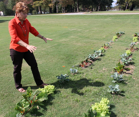 Plant pathologist Ellen Bauske is shown explaining the methods she and other University of Georgia researchers used to plant fall vegetables directly into a turfgrass lawn. The test plot is located on the campus in Griffin, Ga.