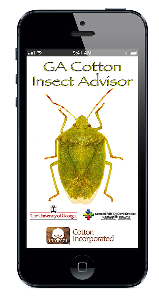 A new app has been developed to better treat and manage stink bugs in cotton.