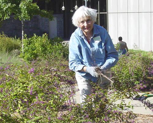 Master Gardener at work
