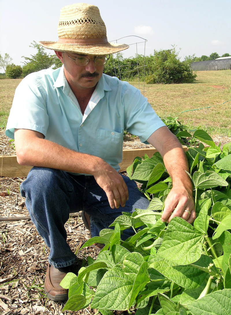 University of Georgia Extension consumer horticulturist Bob Westerfield checks bean plants for signs of disease and insects on the UGA campus in Griffin. Westerfield grows vegetables at work to be prepared to answer home gardener questions. He grows them at home for his dinner table and for extra income.
