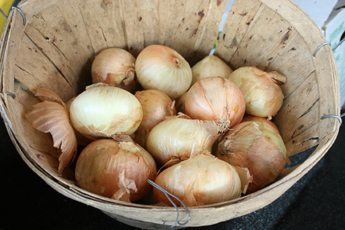 Onion center rot is a devastating disease for Vidalia onion producers in south Georgia.