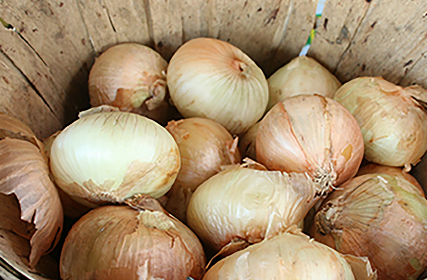 Onion center rot is a financially devastating bacterial disease for Vidalia onion producers in south Georgia.