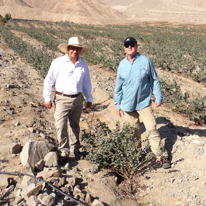 Scott NeSmith visits with growers in Peru to examine blueberry varieties currently being grown there and to establish test sites for UGA blueberry germplasm.