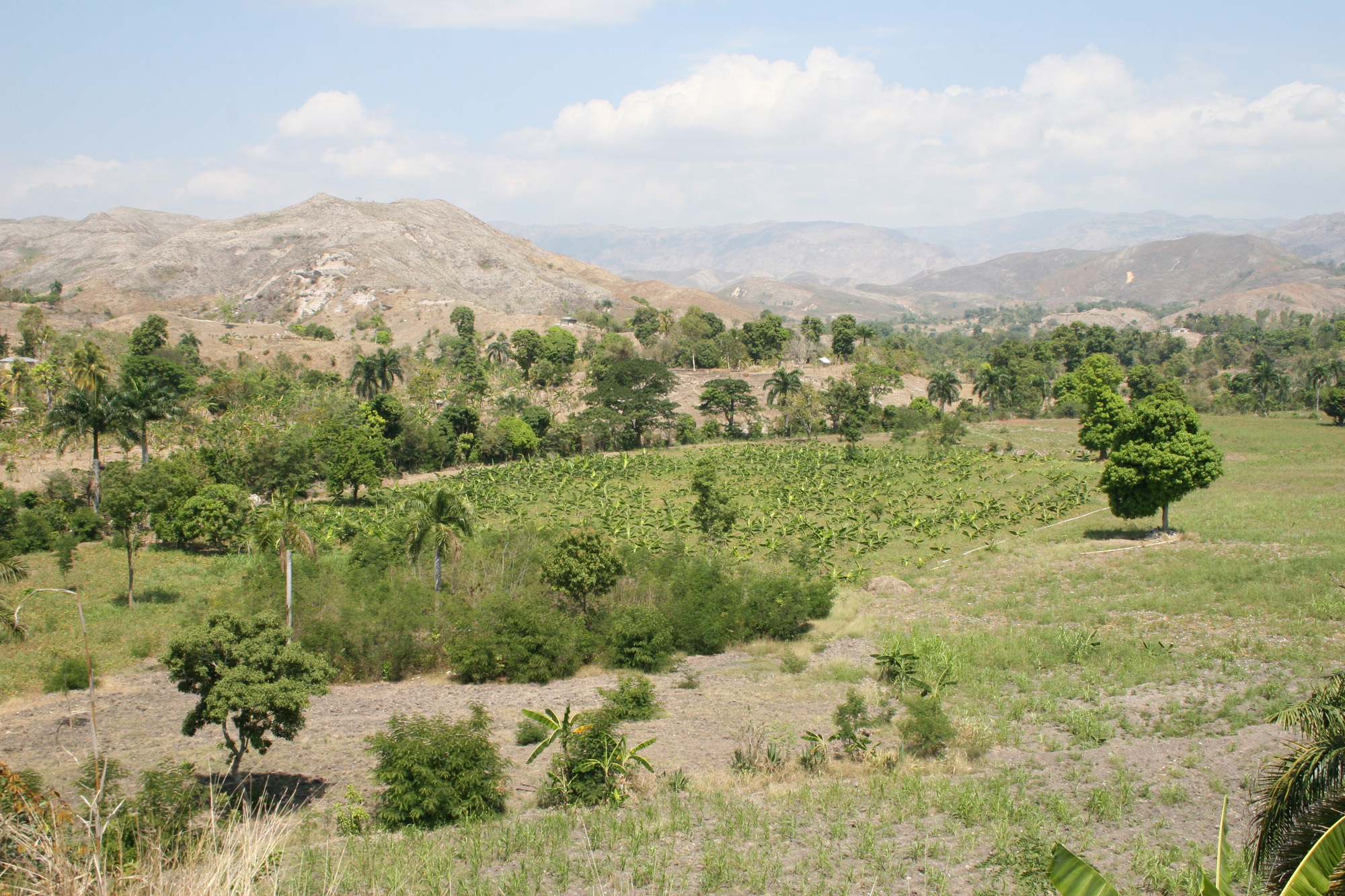 This 30-acre Zanmi Agrikol farm is an unusual oasis found among the deforested, eroded mountains stretching through much of Haiti.