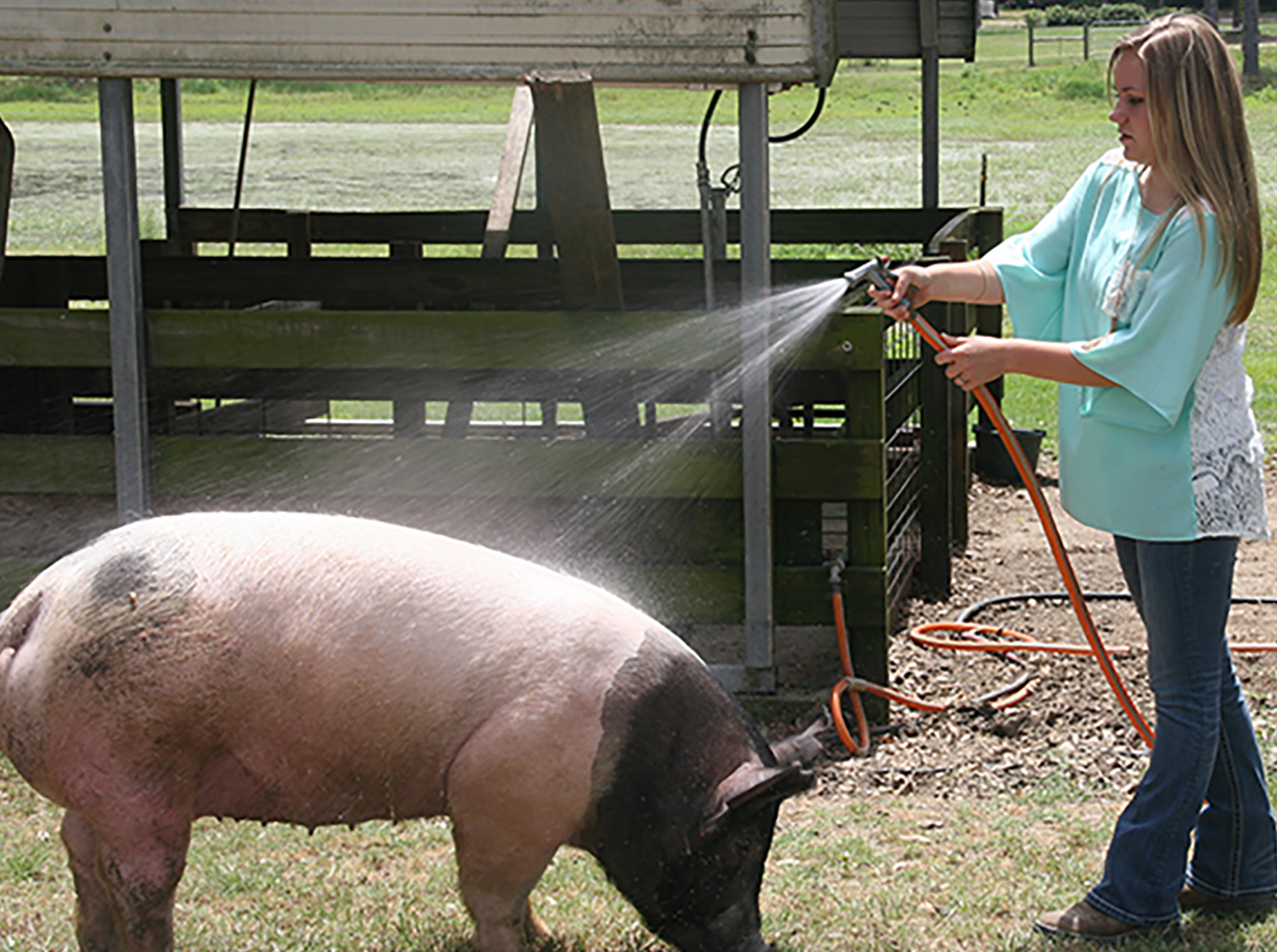 Courtney Conine washes her pig at her home in Camilla, Georgia.