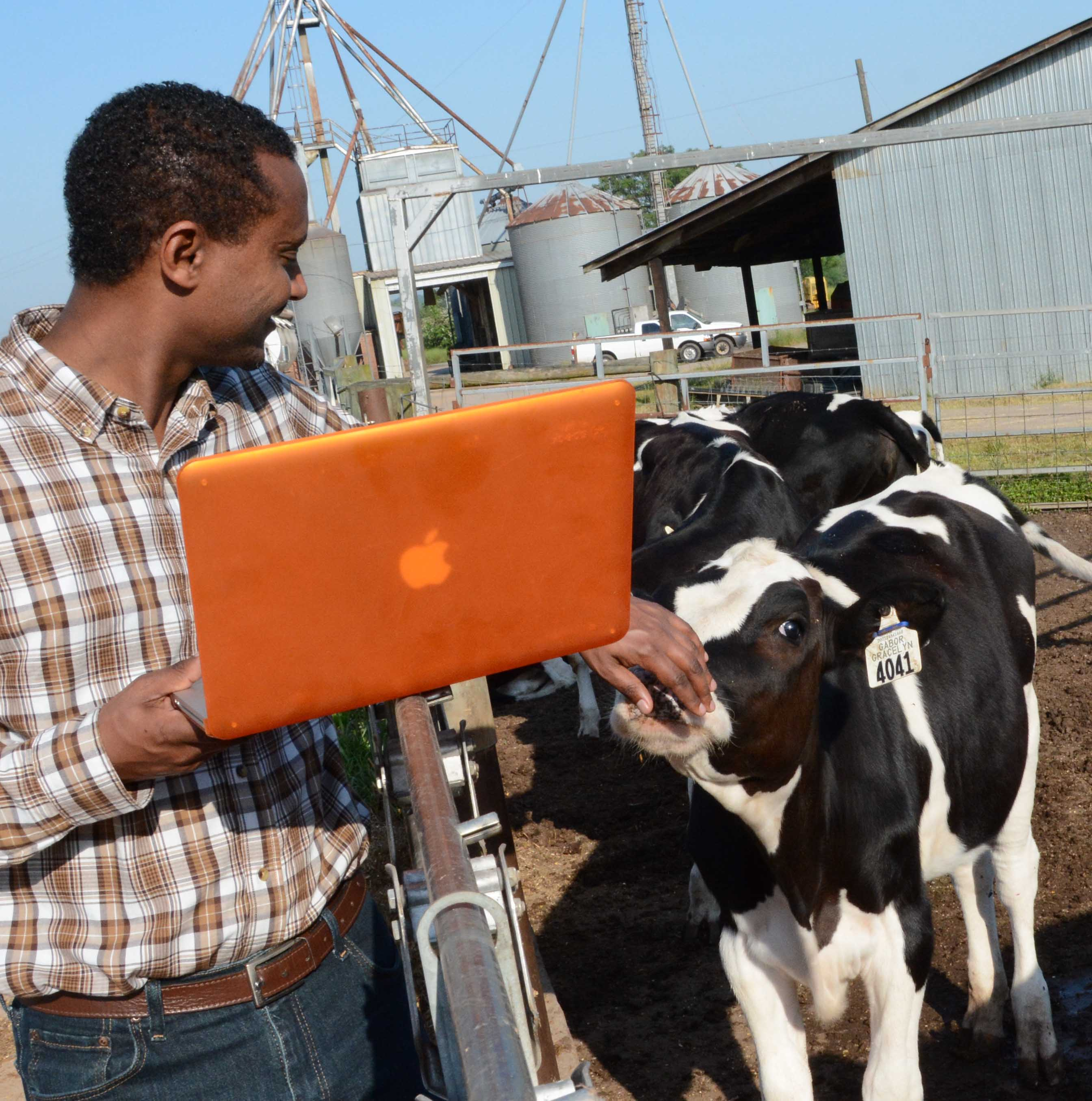 Direba Demisse, a Borlaug Fellow from Ethiopia, is working with worked with Ignacy Misztal in the college's Department of Animal and Dairy Science to develop breeding practices to help Ethiopia's dairy herd to produce more milk.