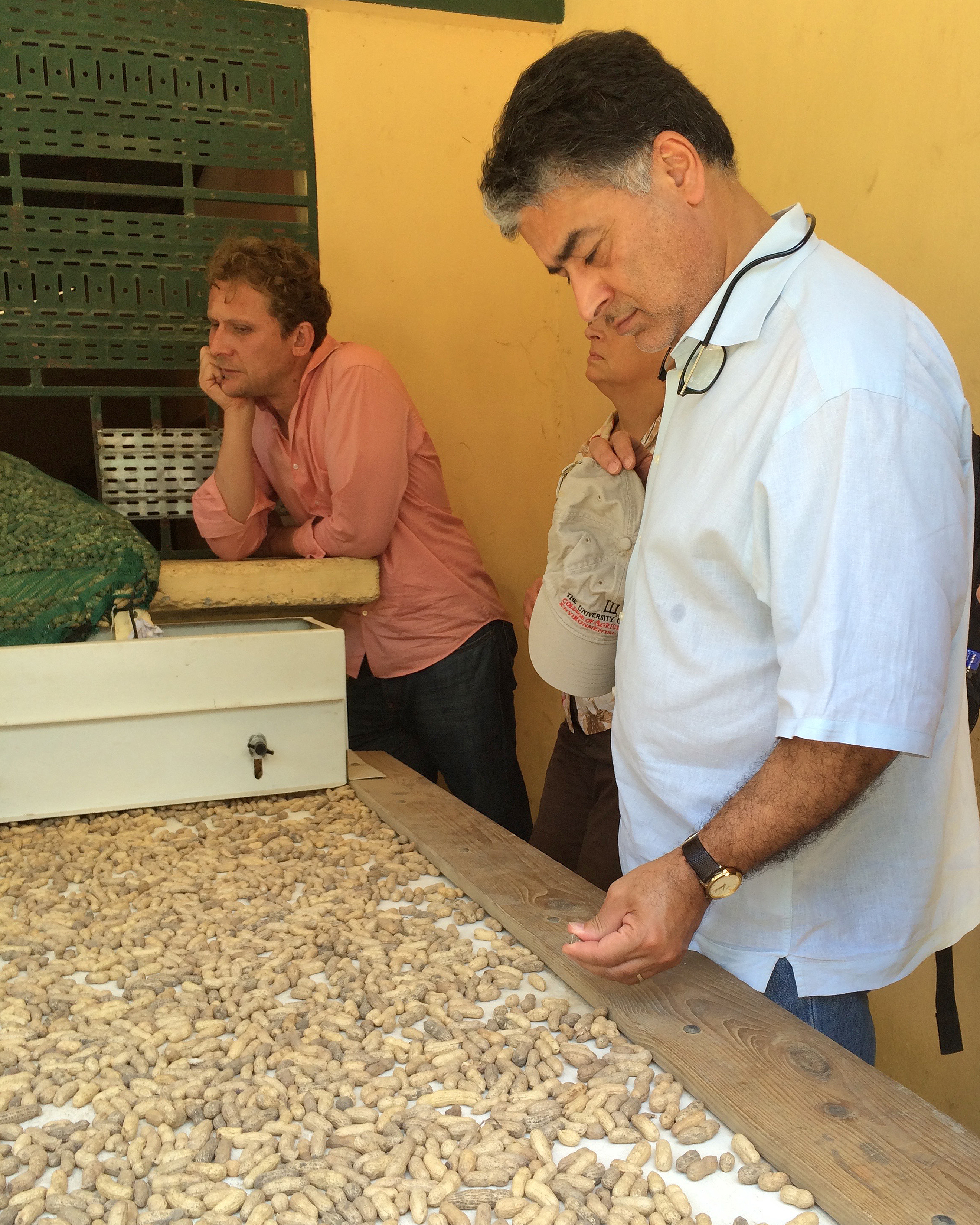Amrit Bart, director of the CAES Office of Global Programs, inspects peanuts during a recent to trip to Haiti in support of the UGA-based Peanut Mycotoxin and Innovation Lab.