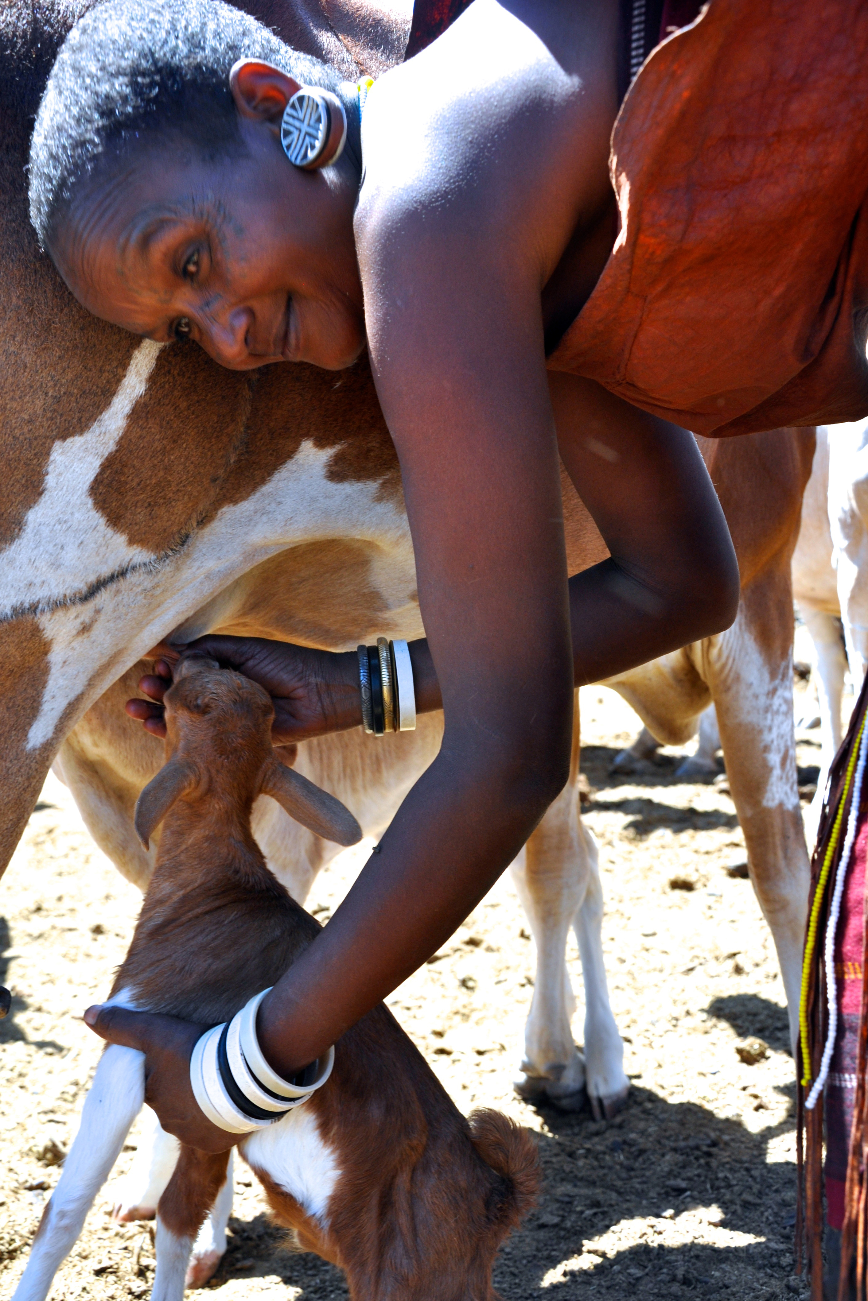 The first place winner of the 2015 Ag Abroad Photo Contest. Entry description: This photo of a Datoga woman was taken near Lake Eyasi in Tanzania, as she milked one of her family's cows and allowed a baby goat to nurse from the cow. The woman pictured is one of five sister wives who are the main caretakers of the family's large herd of cattle and goats. The women of the family will labor many hours a day to milk, feed and water the herd. The Datoga are a pastoralist tribe that place a high value on cattle for their livelihood and as a symbol of status. Every part of the cow is used, from the day-to-day milk for nutrients and dung for wall plaster, to the bones, hide and meat upon slaughter. Cattle are used as a currency for bride prices, and a large herd is seen as a status symbol in the community. Goats are also used as a currency, though are seen as much less valuable.