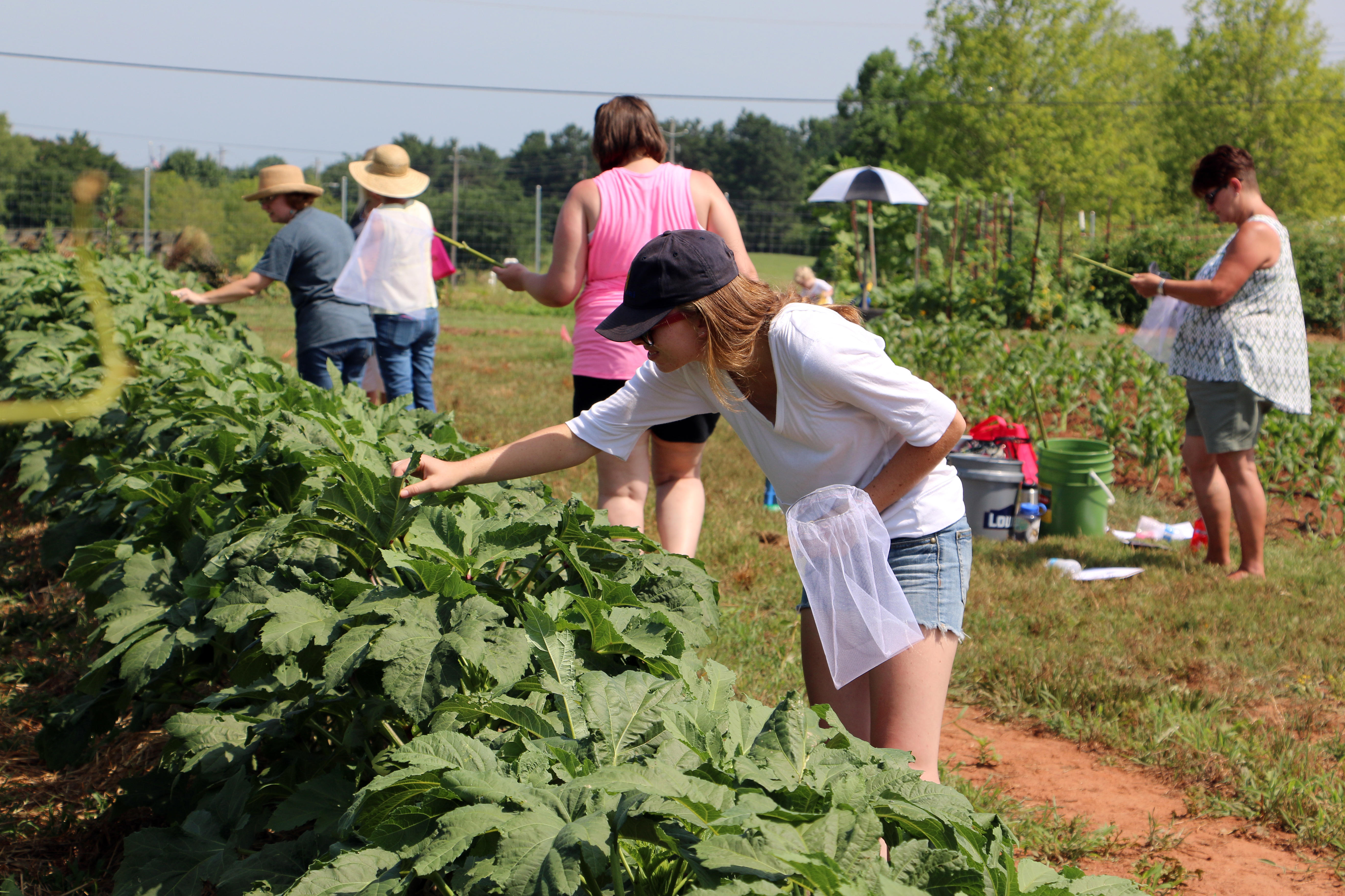Insect scouting is an important part of any vegetable management plan.